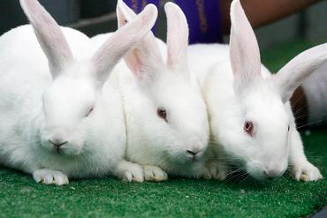 premezclas vitaminico mineralees conejos