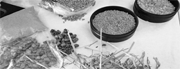 nutricion-animal-covitsa